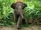 بچه فیل کوچولو