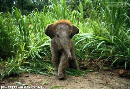 بچه فیل کوچولو cute elephant baby