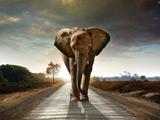 عکس فیل در جاده