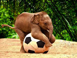 عکس بچه فیل آسیایی بامزه