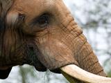 نمای نزدیک فیل