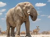 پس زمینه عکس فیل