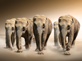 پوستر جالب ار حمله فیل ها