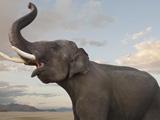 ابراز احساسات فیل بزرگ آسیایی