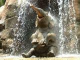 عکس حمام گرفتن بچه فیل