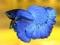 ماهی فایتر آبی