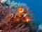 ماهی آکواریومی کلون