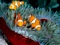 والپیپر زیباترین ماهی ها