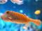 ماهی نقطه ای