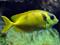 ماهی های آکواریومی