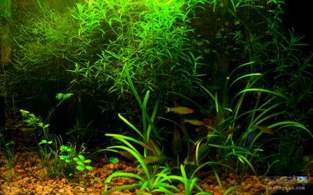 آکواریوم سرسبز underwater green nature