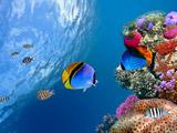 ماهی های آکورایوم در دریا
