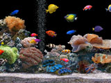 پس زمینه زیبا ماهی های آکواریومی