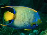ماهی زینتی آکواریومی