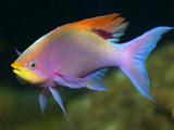 عکس ماهی زینتی آکواریوم