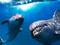 دلفین های بامزه زیر آب