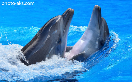 نمایش دلفین ها dophins show