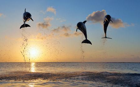 بازی و پرش دلفین ها dolphins jumps