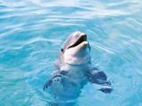 دلفین در استخر