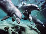 بازی دلفین ها زیر آب