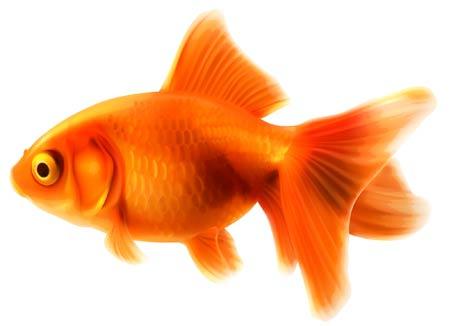 نقاشی ماهی قرمز تنگ goldenfish drawing cute