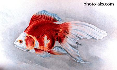 نقاشی ماهی قرمز nagashi mahi geremez