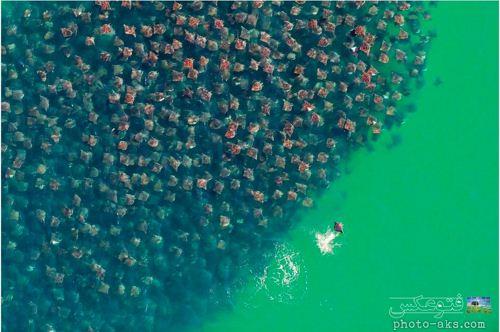عکس تجمع سفره ماهی ها