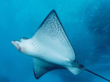 والپیپر آبی رنگ سفره ماهی