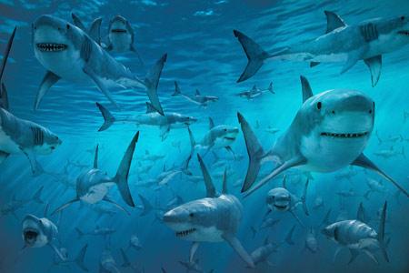 عکس دریا پر از کوسه ماهی shark photo sea