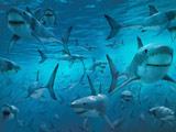 عکس دریا پر از کوسه ماهی