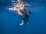 عکس حمله کوسه ماهی در زیر آب