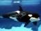عکس نهنگ و بچه نهنگ