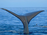 دم وال و نهنگ