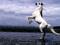 والپیپر اسب عرب سفید