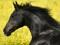 عکس سر و یال اسب سیاه