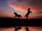 پس زمینه اسب در غروب