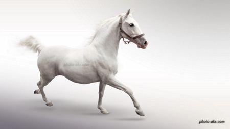 عکس اسب سفید white horse