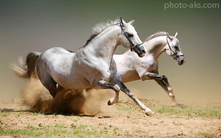اسب ها horses wallpapers
