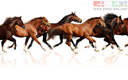 مسابقات اسب سواری horse in runing