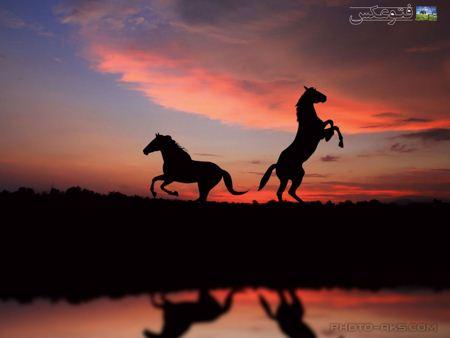 پس زمینه اسب در غروب horses in sunset