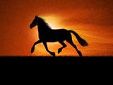 اسب زیبا در غروب خورشید