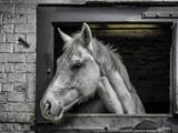 عکس اسب داخل اصطبل