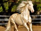 عکس زیباترین اسب جهان