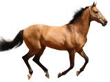 دویدن اسب زیبا با زمینه سفید
