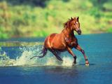 پوستر منظره زیبا از دویدن اسب در آب