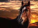 زیباترین عکس اسب ها در غروب