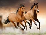 عکس زیبا از دویدن اسب ها