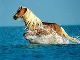 عکس اسب در حال دویدن در دریا