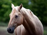 پوستر زیبا از اسب ها
