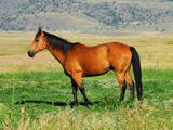 عکس اسب در دشت